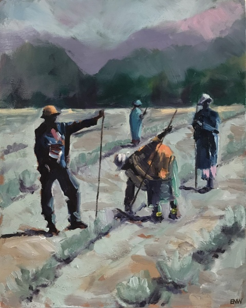 South Africa. Hoeing lavender.