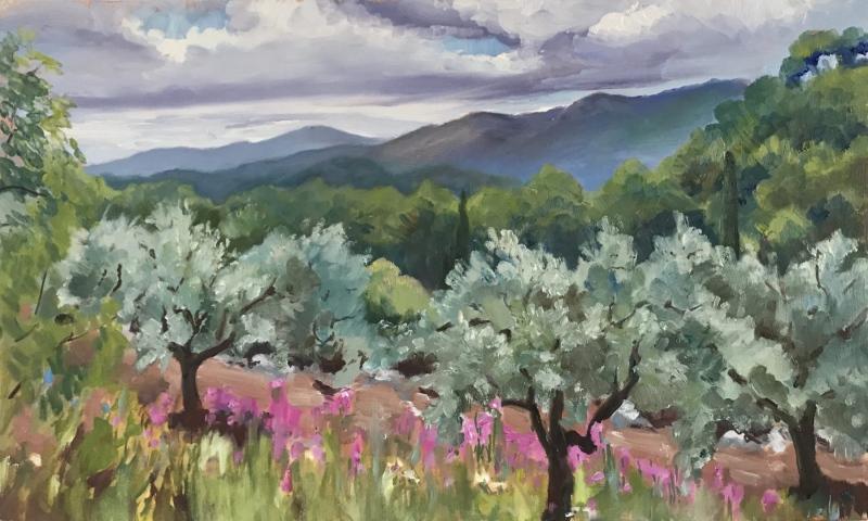 France & Corsica.  Olive grove, Provence.