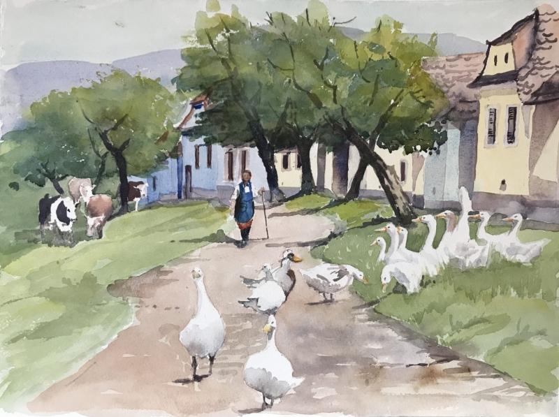 Transylvania.  Viscri, Gerda's ducks.